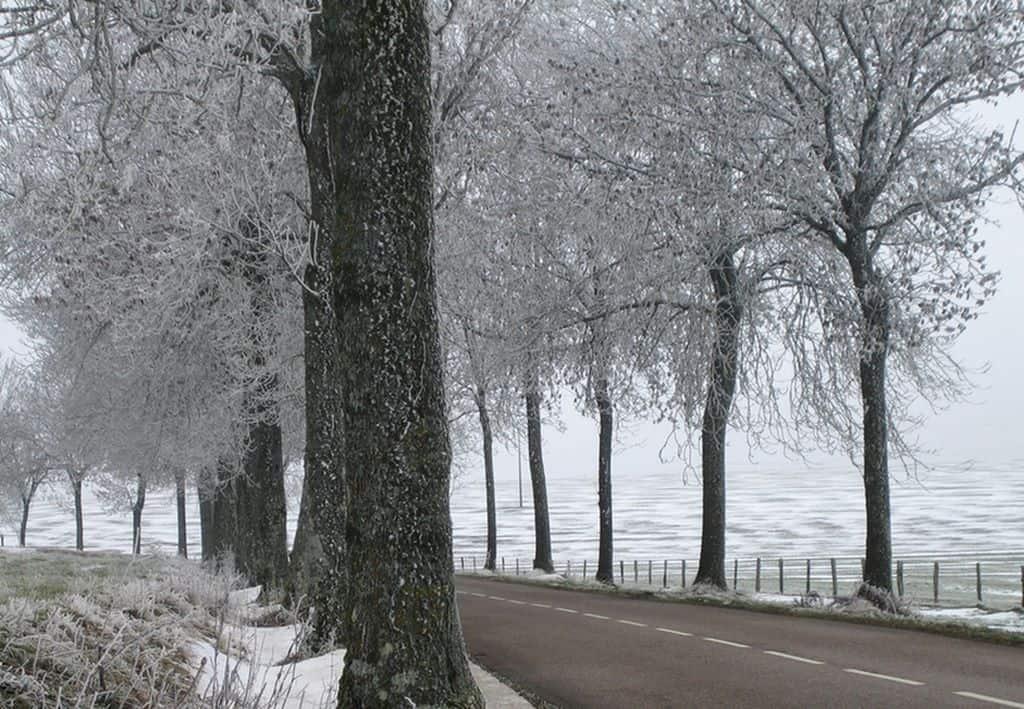 arbres-et-givre
