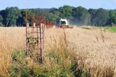 agroforesterie-intraparcellaire