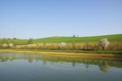 jeune-haie-en-bordure-dopen-field