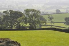 murets-et-arbres-champêtres