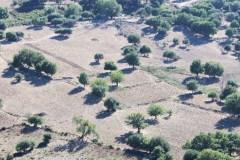 olivier-en-Corse