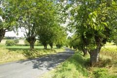 route-bordée-de-têtards