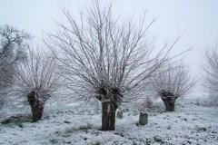 têtards-sous-la-neige
