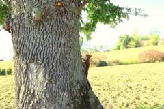 ecureuil-sur-chêne