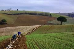 plantation-de-haie-dans-le-tarn