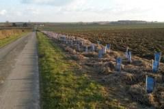 plantation-dune-haie-triple