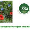 Webinaire Herbacées #2 : Végétal local en milieu urbain, (ré)concilier fleurissement et biodiversité