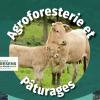 Journée technique : agroforesterie et pâturages - le 2 juillet à Lys-Haut-Layon (49)