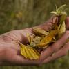 Journée d'échanges : Est si on plantait des espèces locales ? | Agence régionale de la biodiversité Centre-Val de Loire - le 17 octobre à Ingré (45)
