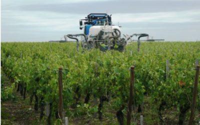 En Gironde : des haies pour protéger des sites «sensibles» des épandages dans les vignes