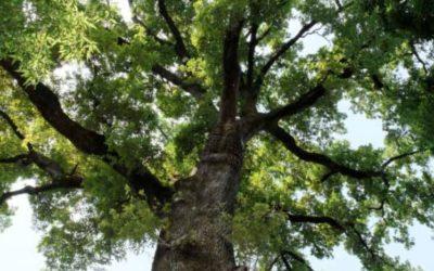 L'arbre(s) à la biennale nature et paysage 2016