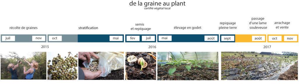 frise chronologique élevage plants AAL'