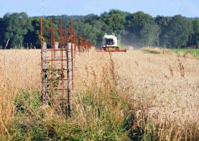 agroforesterie intraparcellaire (Copier)