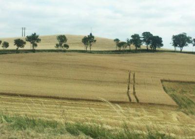 alignement d'arbres en bord de route (Copier)