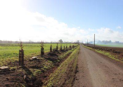 allée de la Motte en normandie-après (Copier)