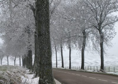 arbres et givre (Copier)