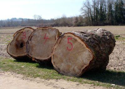 bois d'abattage (Copier)