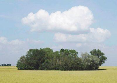 bosquet d'arbres (Copier)