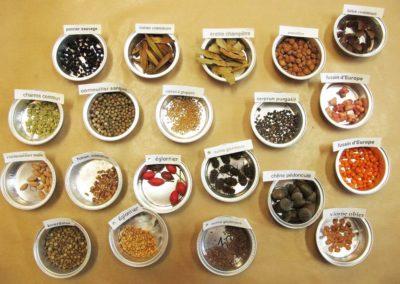 échantillon de graines d'arbres et d'arbustes (Copier)