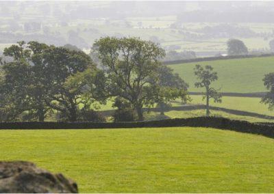 murets et arbres champêtres (Copier)
