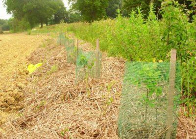plantation haie paillage paille (Copier)