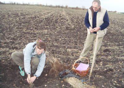 plantation haie racine nue (Copier)