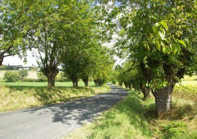 route bordée de têtards (Copier)