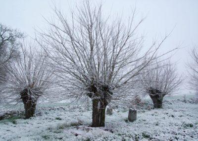 têtards sous la neige (Copier)