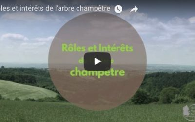 Vidéo «Rôles et Intérêts de l'arbre champêtre» – par Arbres et Paysages Tarnais