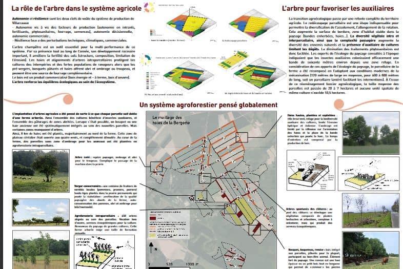 Agroforesterie à la Bergerie de Villarceaux : retour d'expériences
