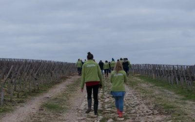 Plantation d'une haie champêtre dans un vignoble du château Gruaud Larose avec la Fondation Yves Rocher