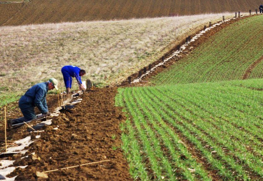 """Lancement de l'appel à projets """"Plantons en France – en route vers les 5 millions"""" avec la Fondation Yves Rocher"""