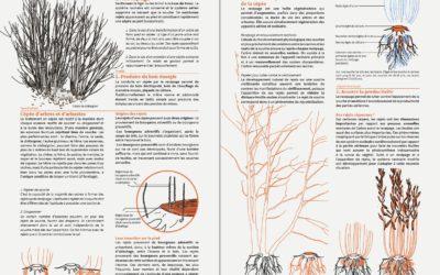 Guide de préconisations de gestion durable des haies