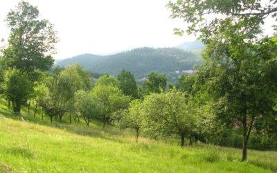 3 juillet 2018 – journée de formation sur l'agroforesterie en Vallée de la Bruche