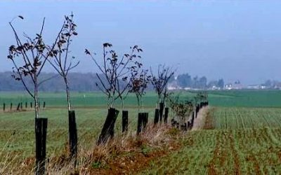 L'agroforesterie : Pourquoi produire avec les arbres ? Le 27 novembre à Vert-en-Drouais