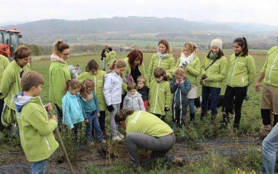 Planter pour abriter le troupeau de brebis dans la Drôme 🗓