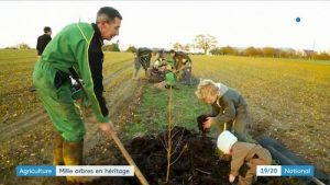 agroforesterie azé