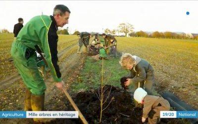 Reportage sur FR3, d'une plantation agroforestière à Azé en Mayenne