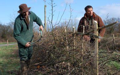 Journées techniques sur le plessage de haie à Yzernay (49) – 5 et 6 mars 🗓 🗺