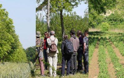 Formation Icosystème : réfléchir, concevoir et valoriser son projet agroforestier 🗓 🗺