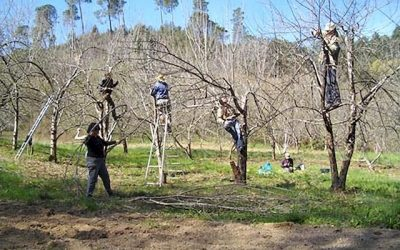 FD CIVAM 30 : Autour de l'arbre – Formations en partenariat  avec AGROOF février – mai