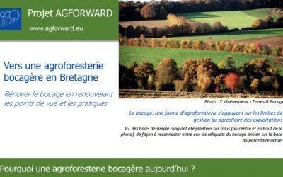 """Pourquoi une agroforesterie bocagère aujourd'hui : l'expérience  de """"Terres et Bocages"""""""