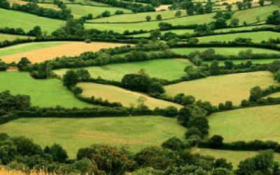 Votez pour le projet «Label bois bocager géré durablement» – présélectionné aux Rural Inspiration Awards