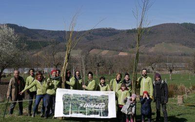 Plantation de haiespour la reconversion d'uneferme en agroécologie – Alsace