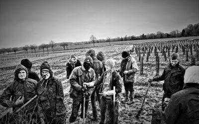 Portfolio d'un projet expérimental de 18ha en intraparcellaire à Ramecourt, par les Planteurs Volontaires 🗓 🗺