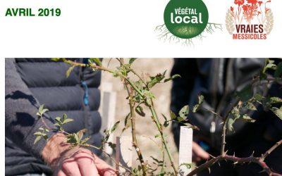 Actualités de la marque Végétal Local