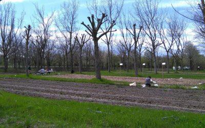 En vidéo : ARBRATATOUILLE – Un projet de recherche participative sur l'agroforesterie maraichère