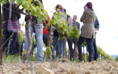 Formation : les haies viticoles – le 17 juin à Autignac (34) 🗓 🗺