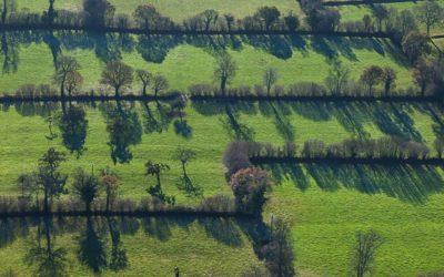 À lire : Rémunérer les services écosystémiques pour préserver les paysages agroforestiers en Europe atlantique et continentale