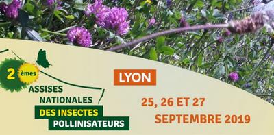 Assises nationales des insectes pollinisateurs | Arthropologia – du 25 au 27 septembre à Lyon 🗓 🗺